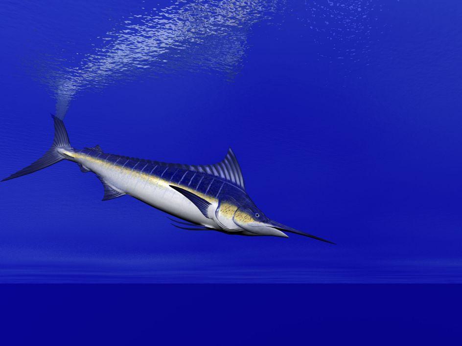 Kona coast deep sea fishing hawaii intrepid sportfishing for Kona deep sea fishing